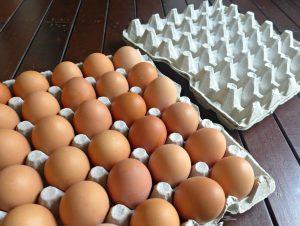 egg-trays-pp-memory