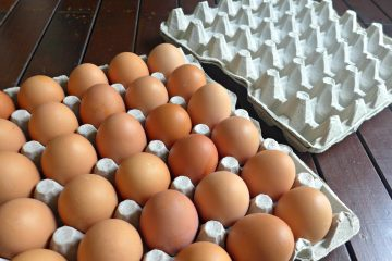 egg-trays-pp-memory